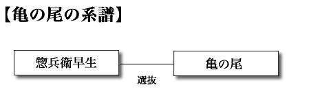 亀の尾の系譜